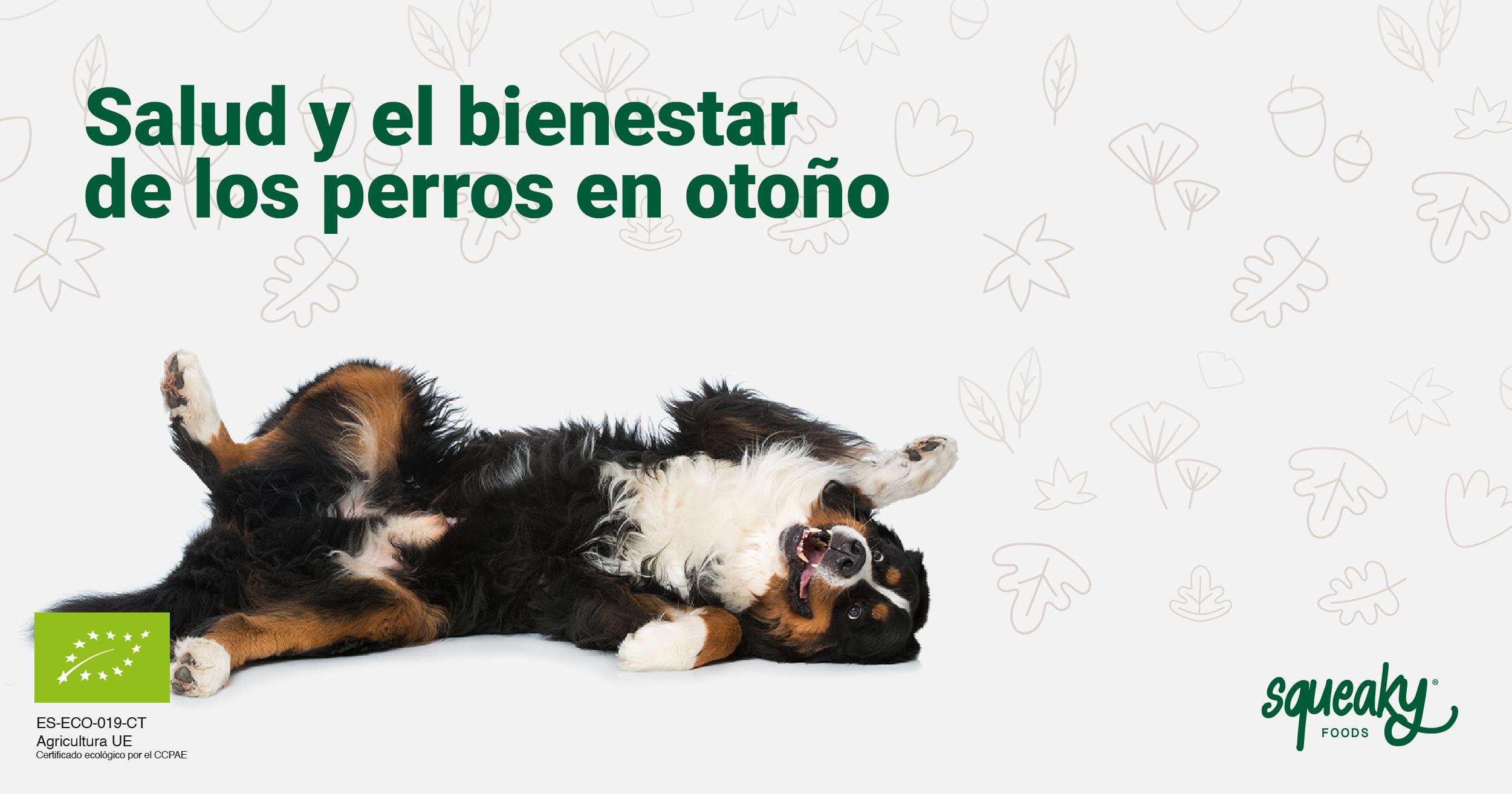 Consejos para conservar la salud de tu perro en otoño