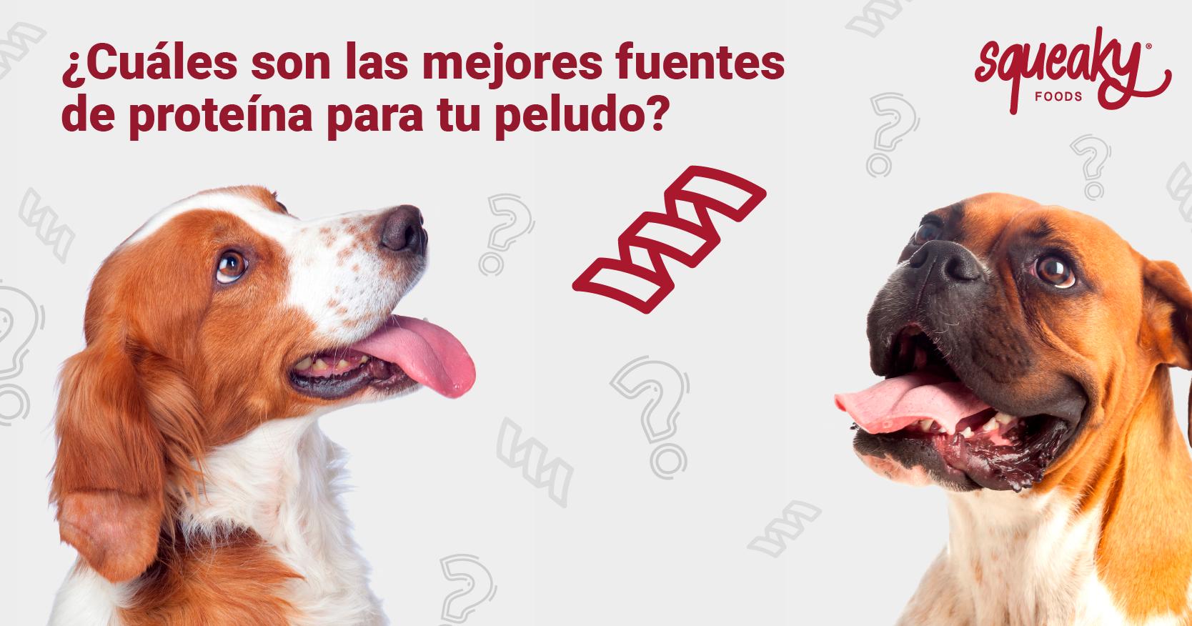 Descubre las mejores fuentes de proteínas para perros
