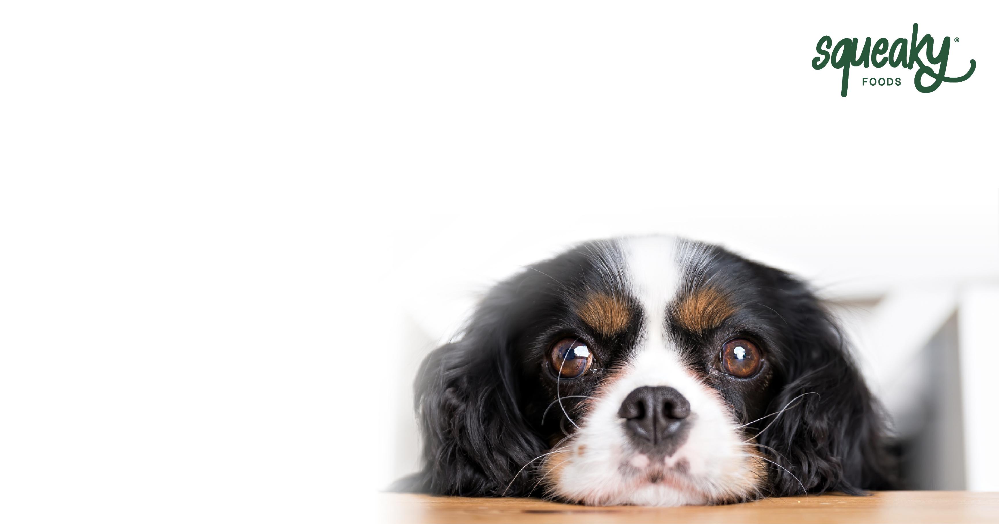 Consejos para evitar que un perro pida comida en la mesa